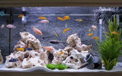 Wasserschäden durch Aquarien: Nicht ganz dicht