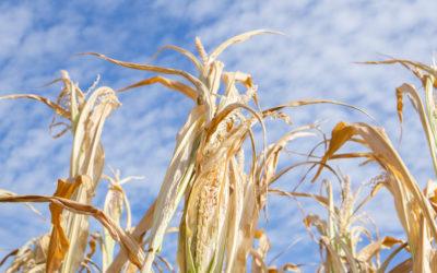 Landwirtschaftliche Versicherungen: magere Zeiten